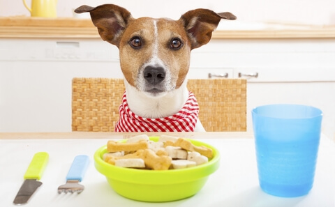 Waiting for Best Dog Food for Weight Loss